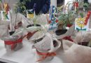 Em Piracicaba vasos de temperos e hortaliças